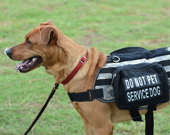 Ptsd Tbi Service Dogs