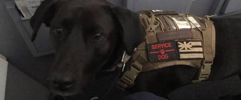 american service dog access coalition semper k9 service dogs for veterans